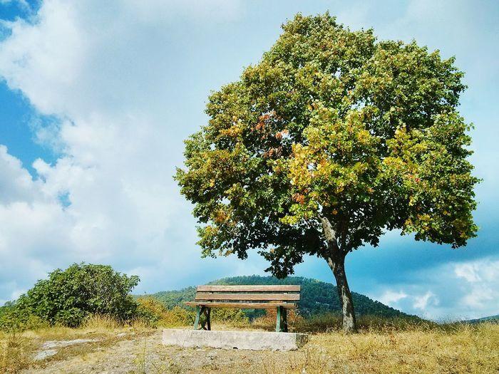 Bench under fig tree Bench Meditation Meditation Time Meditating Meditation Place Meditation Spot Meditation Garden