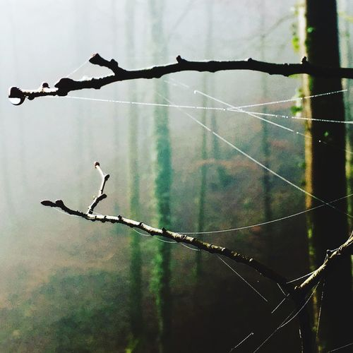 Fog Nature Drop Rain Drops Outdoors Beauty In Nature Forest A Walk In The Woods A Walk To Remember
