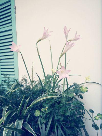 Flower Bloom In