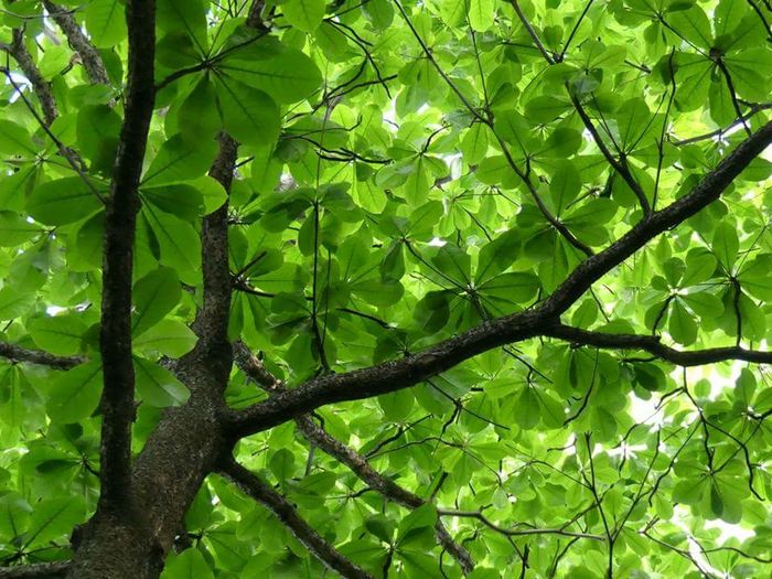 Full frame shot of tree