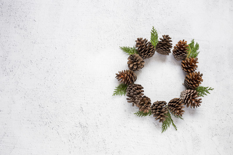 Beauty In Nature Copy Space Day Directly Above Food Green Color Growth High Angle View Indoors  Leaf Nature No People Pine Cone Plant Plant Part Studio Shot Wall - Building Feature White Color Wreath
