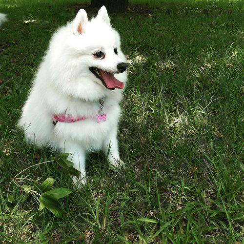 Dog First Eyeem Photo
