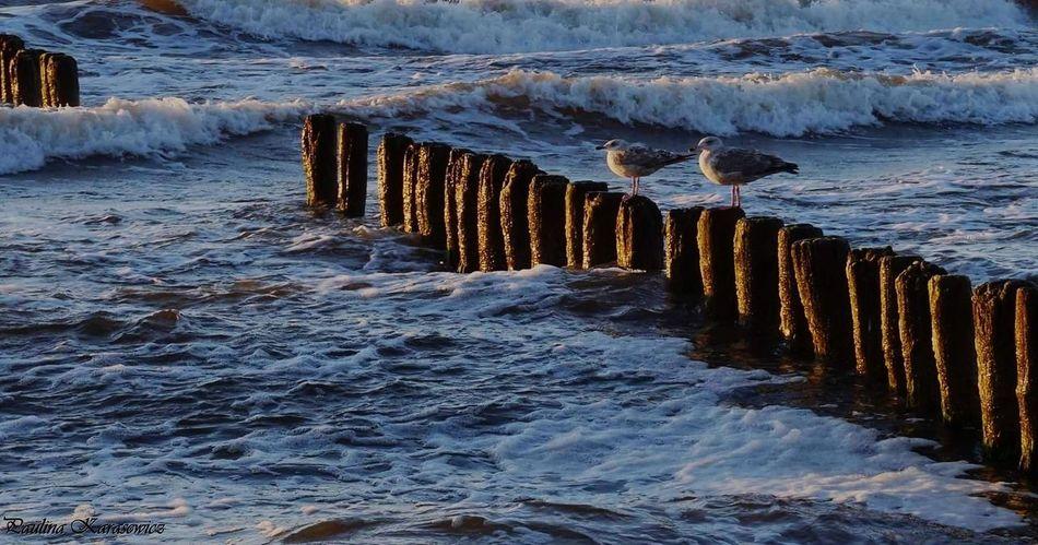 Mewy Morze Bałtyckie Water Beach Nature Beauty In Nature Mielno Plaża Morze 🌞🌊 Plaza Słońce Fale Woda Polska