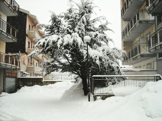 Snow Wintertime Winter Weather Snowing Nature Tree Nopeople Avellino Nature Outdoor Photography Outdoor Outdoors