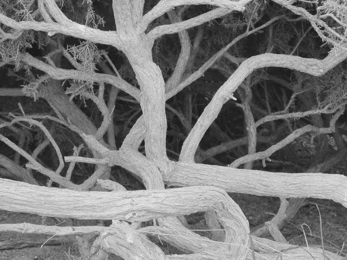 Close-up Growth Nature Intertwined Day Tangled Bush Blackandwhite Landscape Outdoors Welcome To Black Shurb Shurberry Shrubbery Knotted Wood Premium