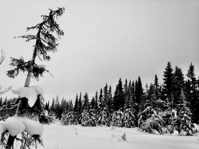 Blackandwhite Trees