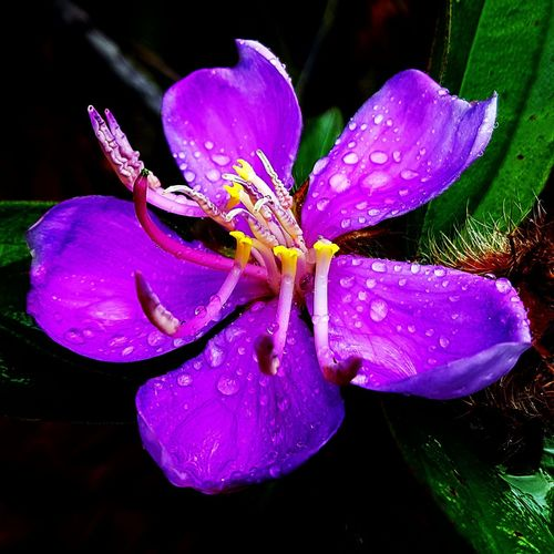 Purple flower Flower S7edgephotography Droplets Airitamdam Nature Colour Of Life