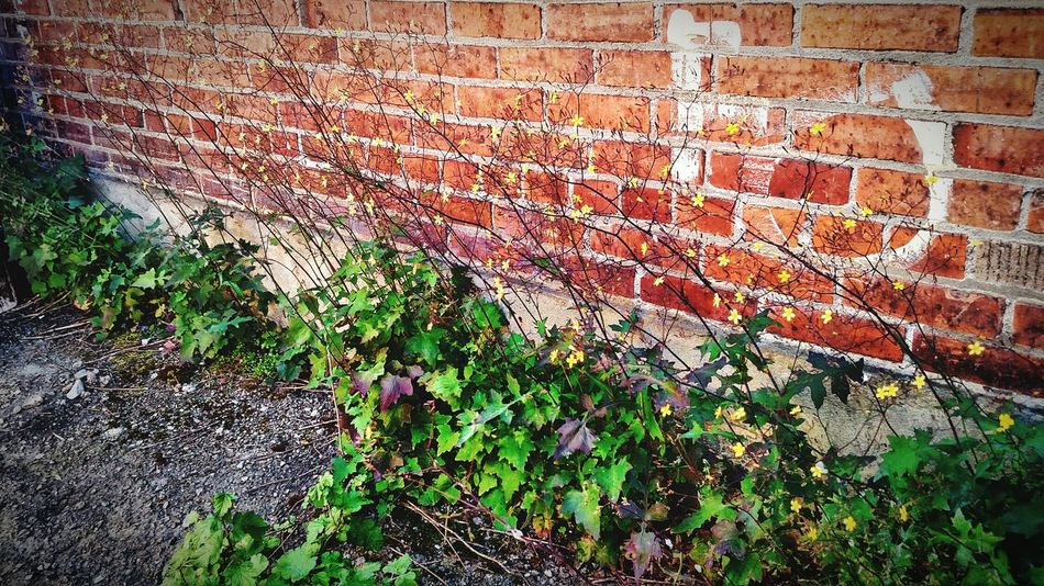Outdoors Day No People Backgrounds Full Frame Architecture Close-up Nature Grunge Wall Brick Building Countryside Rustic Beauty EyeEm Best Shots Decay_nation Decayed Beauty Rurual Scene