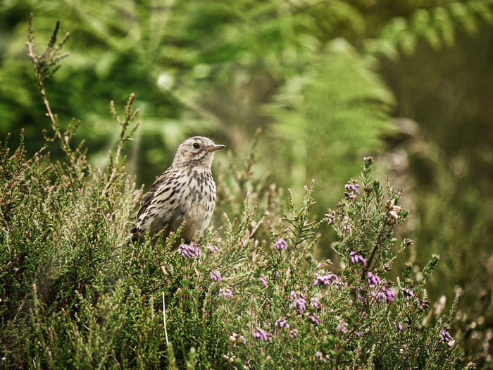 Bird perching on flowering plant
