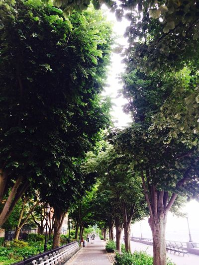 Tree Lined NYC Esplanade EyeEmNewHerе No People Day Outdoors Growth Battery Park City NYC Photography NYC