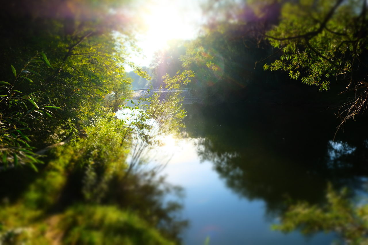 tree, plant, beauty in nature, tranquility, nature, growth, sky, tranquil scene, no people, sunlight, day, scenics - nature, outdoors, green color, selective focus, forest, land, water, non-urban scene, lens flare, bright