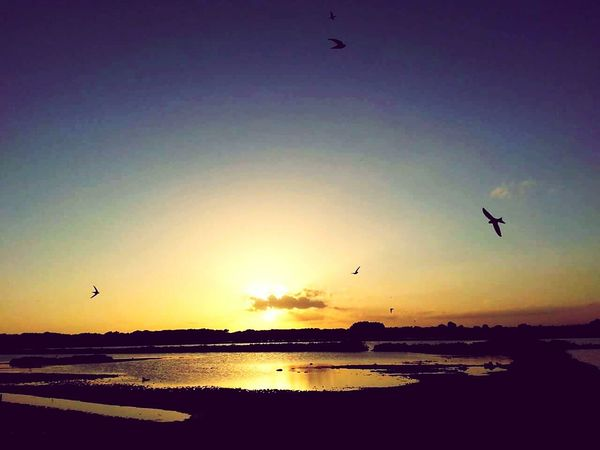 Sun_collection Birds Atardeceres Sunset Sunshine Island Paradise Ses Salines
