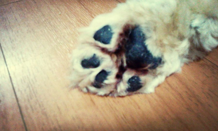 lil willow's paw ^-^ awwweee <3 Dog Hey Willow