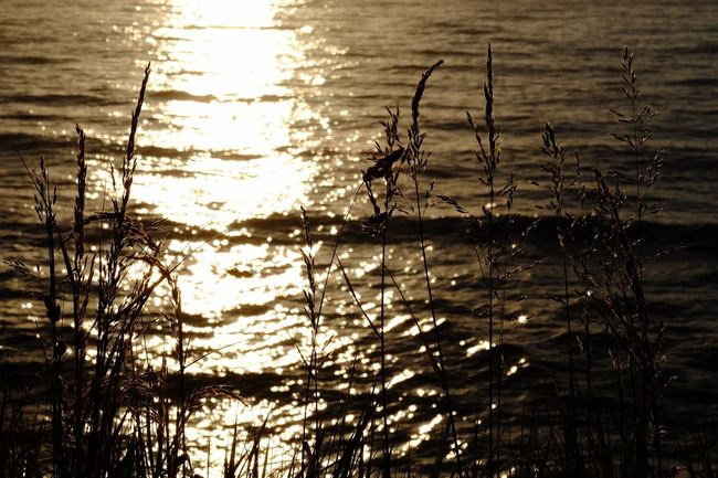 Golden seas Sunrise Sunrise Plant Water Reflection Sky Nature Tranquility Beauty In Nature No People Silhouette Idyllic