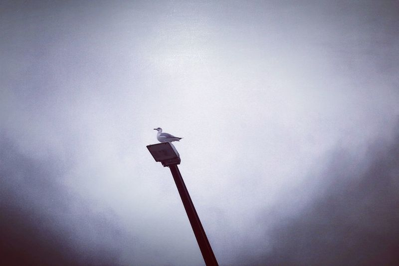 Canon Canonphotography Naturelovers Skyoverberlin Berlinsky Outside Outdoor Pictures Outside Photography Outdoors Animals In The Wild Animal Themes Sky Möwe Seagull