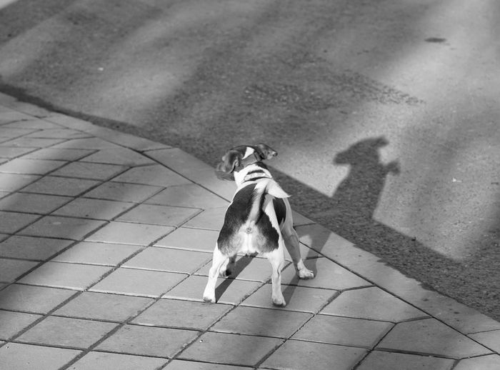 Rear view of dog standing on footpath