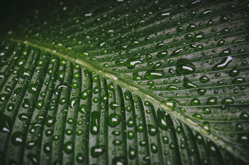 After the Rain Wet Drop Green Color Water Close-up Rain Backgrounds Full Frame Leaf No People Freshness Nature Plant Part Pattern Leaf Vein Plant Growth Beauty In Nature RainDrop Outdoors Rainy Season Dew Leaves Purity Blade Of Grass