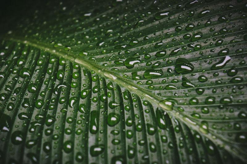 Full frame shot of wet leaves during rainy season