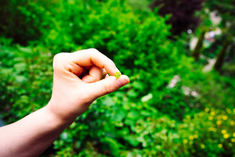 Human Hand Hand Human Body Part Plant Green Color Focus On Foreground Real People One Person Nature Personal Perspective Body Part Day Unrecognizable Person Holding Human Finger Growth Close-up Finger Lifestyles Outdoors Human Limb Four-leaf Clover Lucky Clover Small Luck Lucky