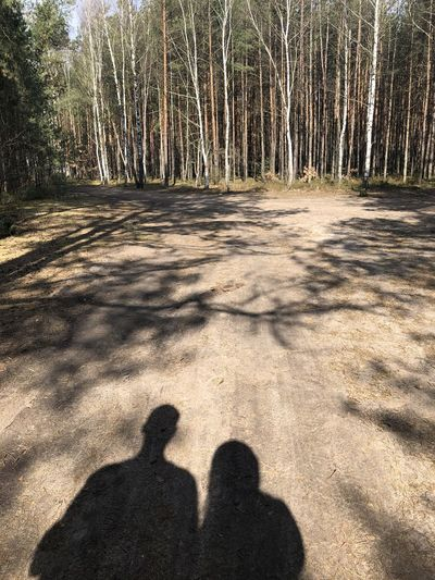 Shadow of people on tree trunk