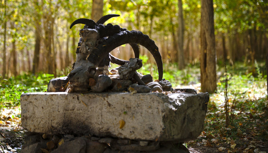 Statue on rock in forest