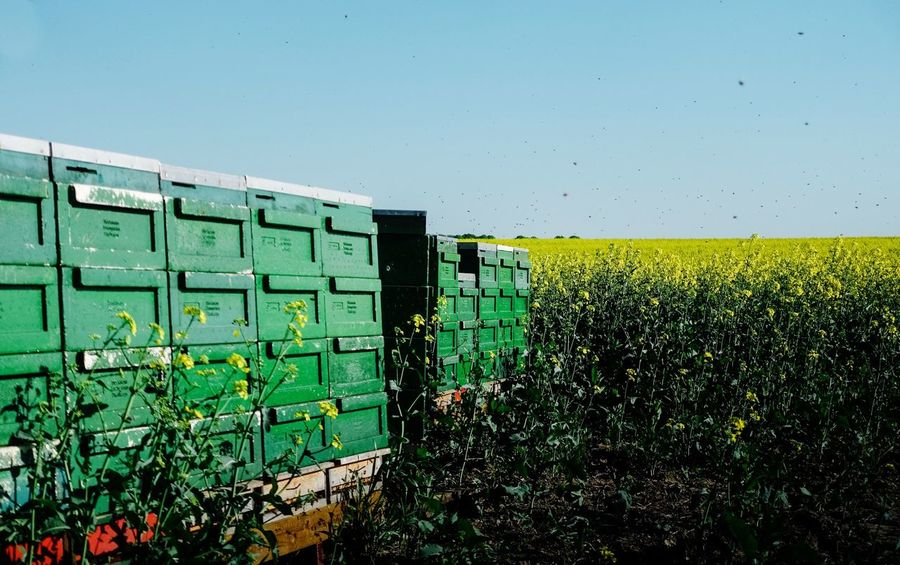Bees home... Countryside Beehive Bee Green Color No People Nature Day Wall - Building Feature Plant Built Structure Architecture Land Outdoors Growth Field Sunlight Sky Agriculture