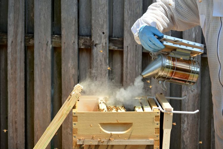 Beekeeper in protective suit preparing to check a young hive by smoking the bee hive