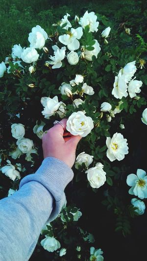 Flower Human Body Part One Person High Angle View Human Leg Human Hand Real People People Day Plant Outdoors Adults Only Low Section Adult Nature Close-up Freshness One Woman Only Flower Head
