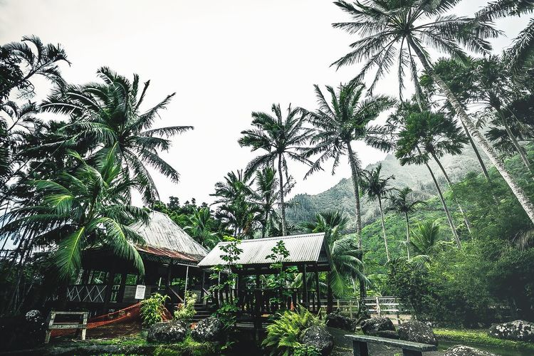 Park Palm Trees Garden Iao River Iao State Park, Maui HI Plant Tree Sky Low Angle View Growth Nature No People Outdoors Beauty In Nature Tranquility Leaf Day
