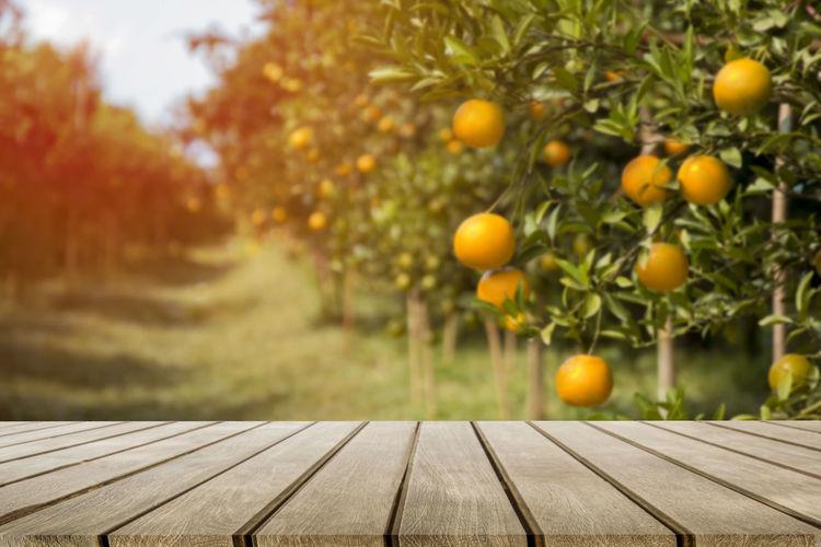 Orange fruits on tree by footpath