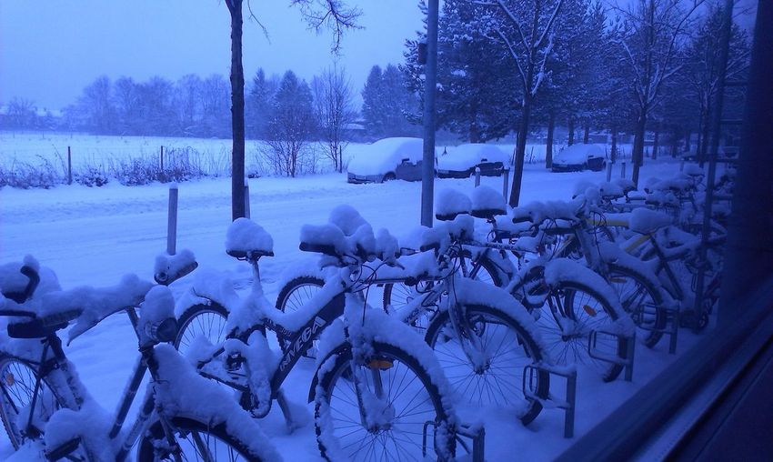Beauty In Nature Bicycle Cold Cold Temperature Covering Day Frozen Mode Of Transportation Nature No People Outdoors Plant Snow Tranquility Transportation Tree Tree Trunk Wheel Winter