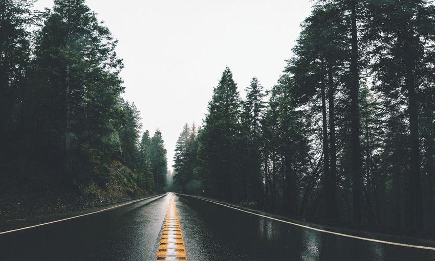 Road Passing Through Trees