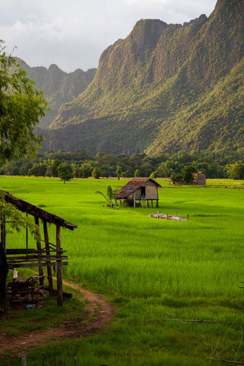 Agriculture Beauty In Nature Day Farm Field Grass Green Color Growth Landscape Laos Laos, Lao Trip Mountain Mountain Range Nature No People Outdoors Rice - Cereal Plant Rice Paddy Rural Scene Scenics Terraced Field Tranquil Scene Tranquility Tree Water