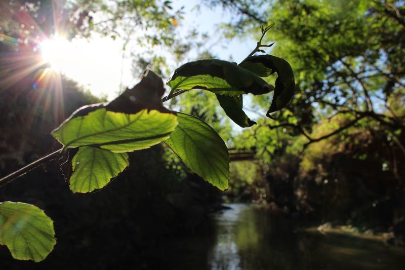Leaf Water Nature Green Color Tree Growth Sun Day Sunlight Outdoors Branch No People Beauty In Nature Low Angle View Close-up Animals In The Wild Tranquility Sunbeam Animal Themes Freshness Glare Sun Glare Sun Glare And Plant The Secret Spaces