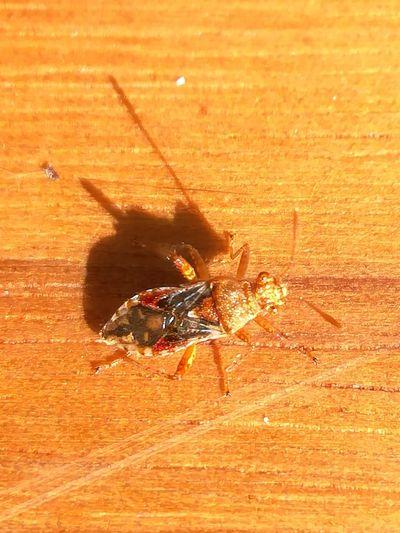 Insecte Table Bois Soleil