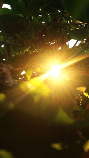 beautiful light EyeEmNewHere Sunrise Tree Sunlight Sun Sunset Summer Sunbeam Lens Flare Sky Shining