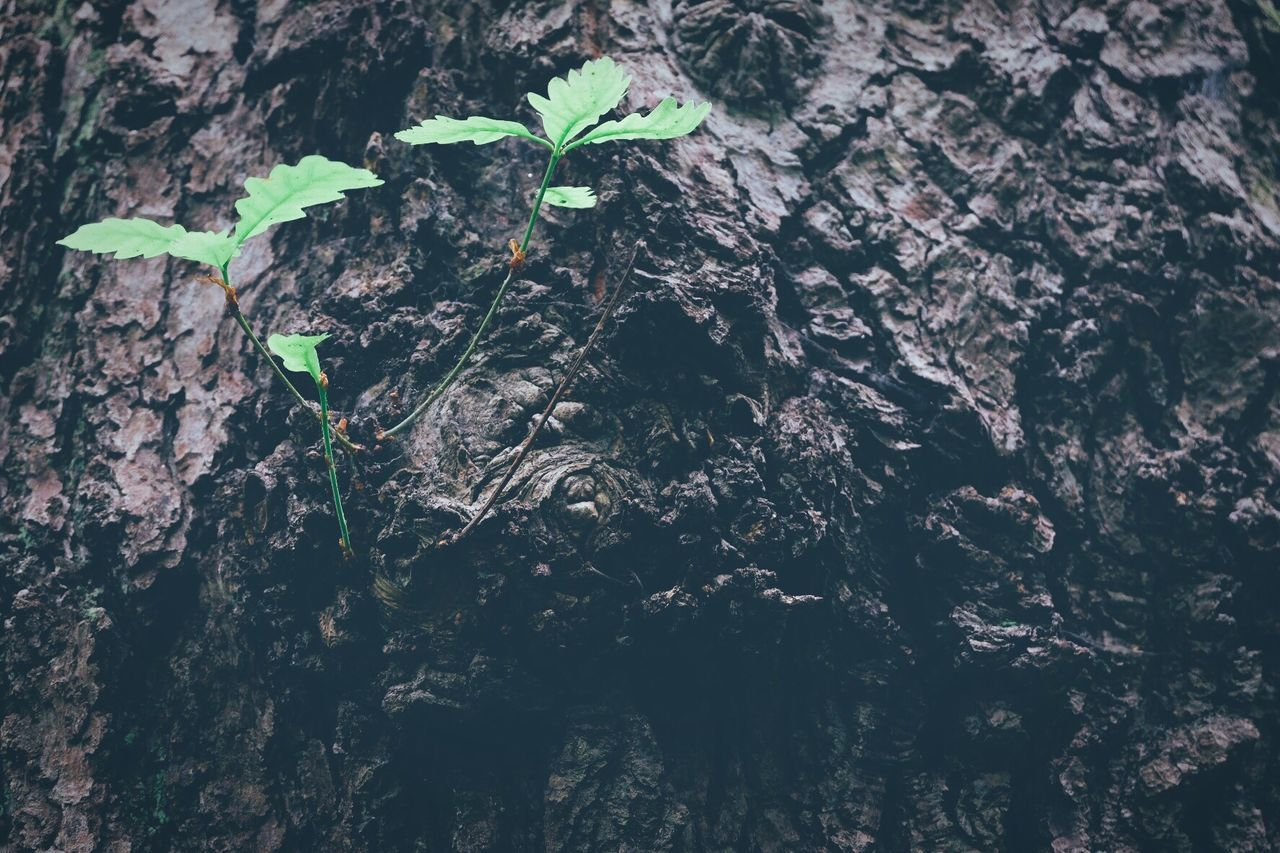 growth, leaf, plant, nature, growing, green, no people, fragility, bark, tree trunk, close-up, day, outdoors, tree, beauty in nature, freshness