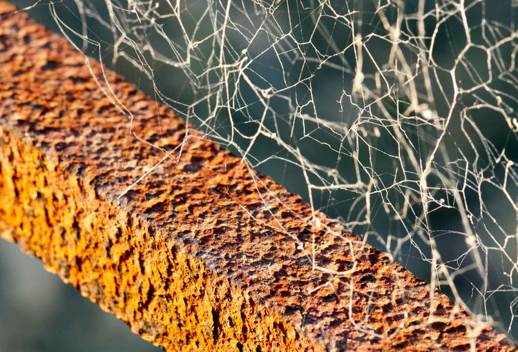 Rusty Web Cemetery Close-up Day Detail Focus On Foreground No People Outdoors Rust Spider Web Textured  Web