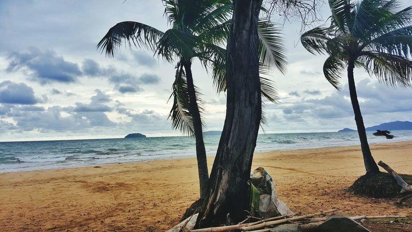 Tree Beach Sea Sand Water Nature Sky Birds🐦⛅ Travel Destinations at Tanjung Aru Beach Sabah Below The Wind Malaysia,Kota Kinabalu The Great Outdoors - 2017 EyeEm Awards Live For The Story