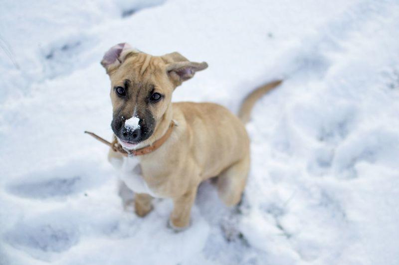 Portrait of dog on snow