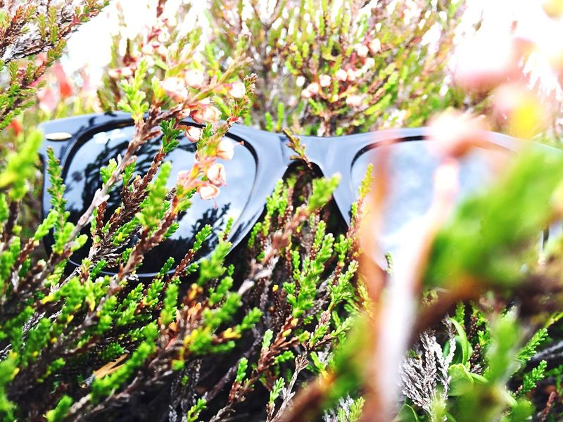 Love my Ray•Ban Escaping Hello World Niceday Nature Sunglasses Check This Out Reflection