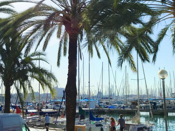 Palm Tree Tree Beach Sea Tree Trunk Outdoors Palm Frond Water Day Vacations Real People Nature Nautical Vessel Growth Moored Men Beauty In Nature Sky People Vacation Destination Palma De Mallorca Ship Harbor View Harbor Boats