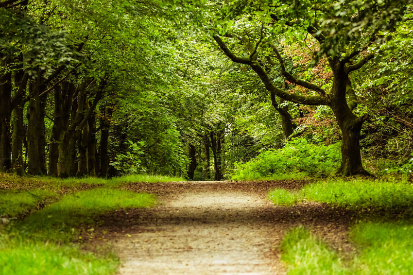 Beauty In Nature Day Direction Environment Footpath Forest Grass Green Color Growth Land Landscape Nature No People Outdoors Plant Road The Way Forward Tranquil Scene Tranquility Transportation Tree Treelined WoodLand