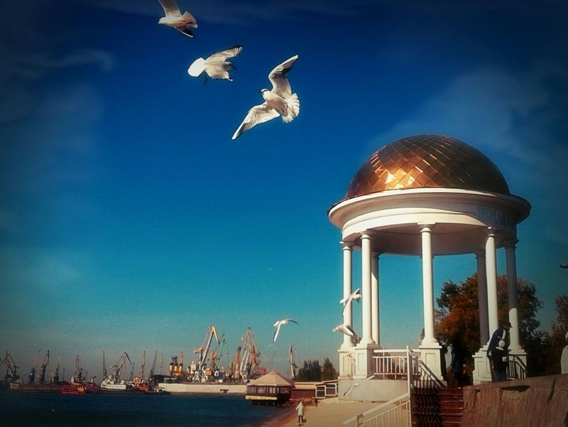 I Love My City Berds Sky Capture The Moment Berd Fly Seagull Seagulls Sea And Sky Sea View