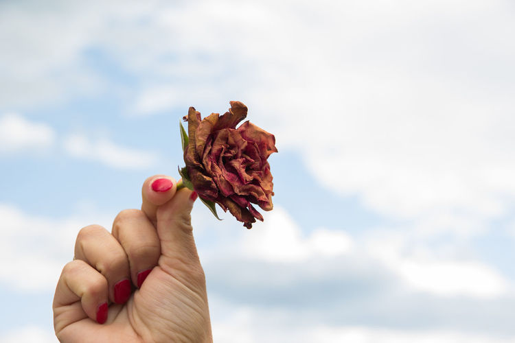 dried rose in hands Human Hand Hand Holding One Person Human Body Part Real People Nature Focus On Foreground Unrecognizable Person Human Finger Finger Body Part Lifestyles Personal Perspective Cloud - Sky Sky Day Food And Drink Food Outdoors Human Limb