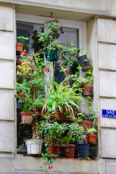Blooming Competition Crowded Crowded House Flower Flower Pot Flowering Freshness Green Color Growing Growth House House Plant Houseplant Outdoors Overboarding Paris Plant Life Pot Plant Potted Plant Window