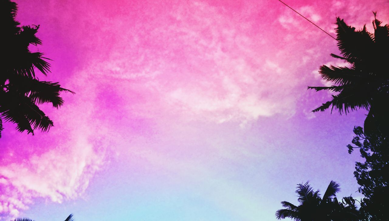 low angle view, tree, palm tree, silhouette, sky, pink color, beauty in nature, outdoors, sunset, nature, no people, growth, scenics, day