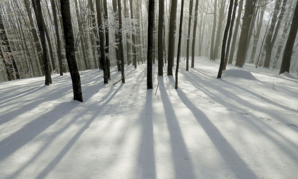 Snow Shadows Forest Landscape Shadows On Snow Snowy Snowy Woods Winter Tree Shadows Winter Woodland