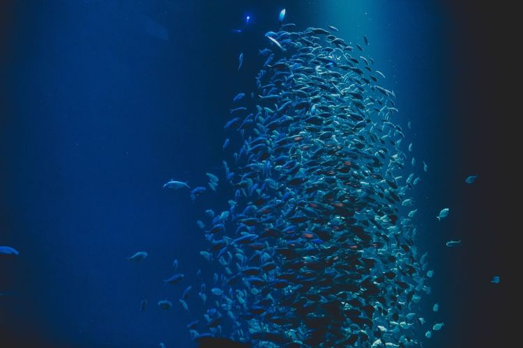 School of fish School Of Fish Fish Abundance No People Large Group Of Animals Blue Water Indoors  Illuminated Sea Life Animal Themes UnderSea Nature Close-up