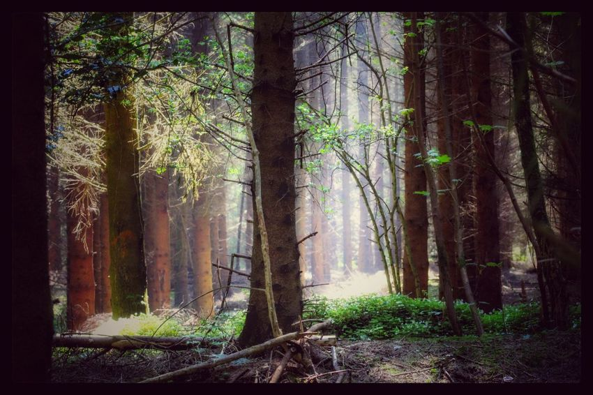 Hillsborough Forest Northern Ireland Eyeem Forest Eyeem Forest Lovers Forest Woodland Sun WoodLand EyeEm Best Shots - Nature Nature Natures Magic Exceptional Photographs Our Best Pics EyeEm Gallery Nature_collection EyeEm Best Shots EyeEm Nature Lover Background Trees Forest Photography Beauty In Nature Showcase June The Magic Mission